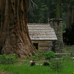 National Park log cabin