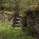 Dry laid stone fence