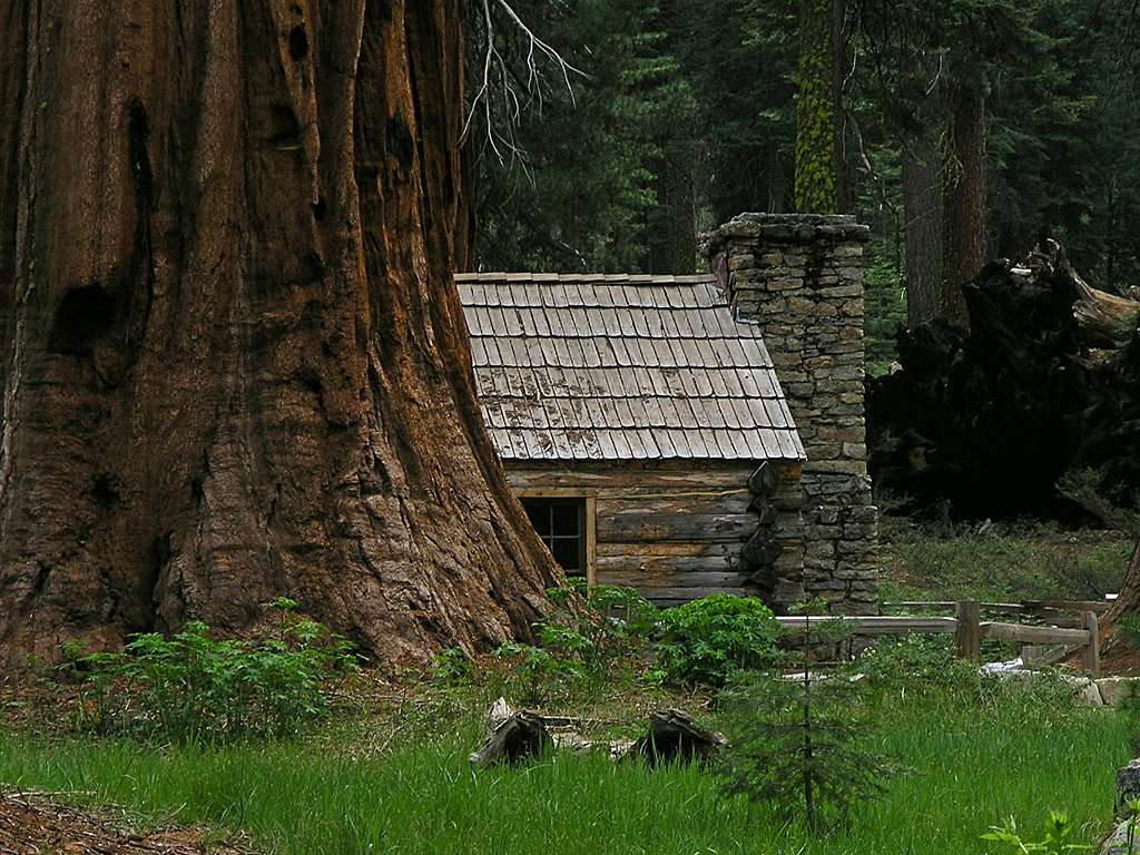 to kings on cabins tree taking canyon at meet national largest dsc earth standing hike in a sequoia and park trees the