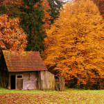 A handmade shed
