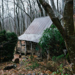 Building your own home in the woods